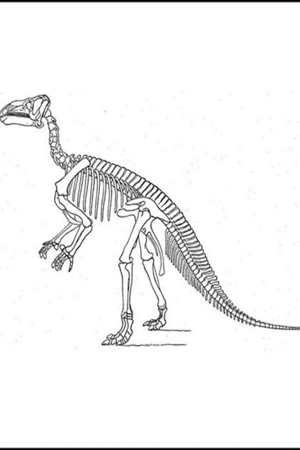 Traces-iguanodon